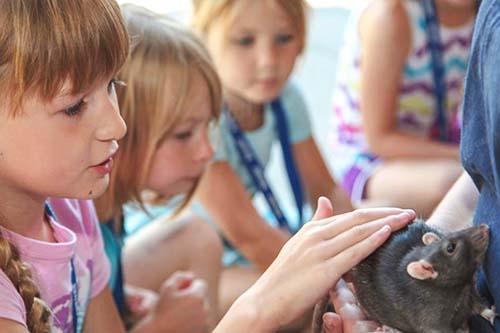 Day Camps with Animals and Wildlife